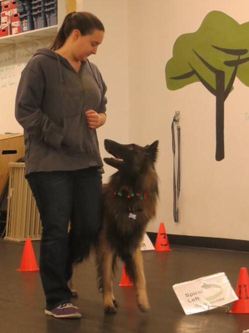 Rally Obedience Drop In Dog Training