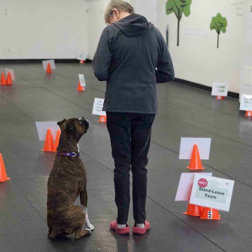 Cyber Rally Obedience Dog Training